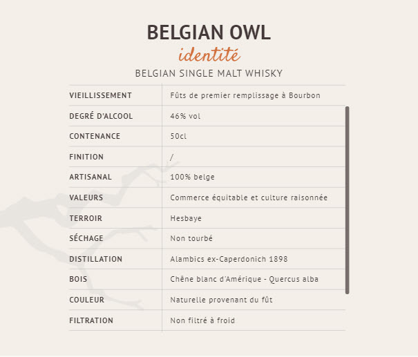 belgium owl -2.jpg
